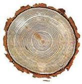 albero sezione.jpg